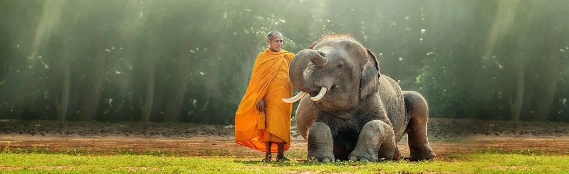 /resources/quick-sell-holidayshop/2019/1203/Monk-and-Baby-Elephant_1.jpg